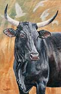 Black Nguni Cow