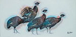 Crested-Guineafowl-two