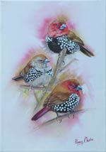 Pink-throated Twinspots