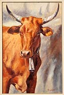 Red Nguni Cow