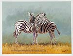 Zebra-friends